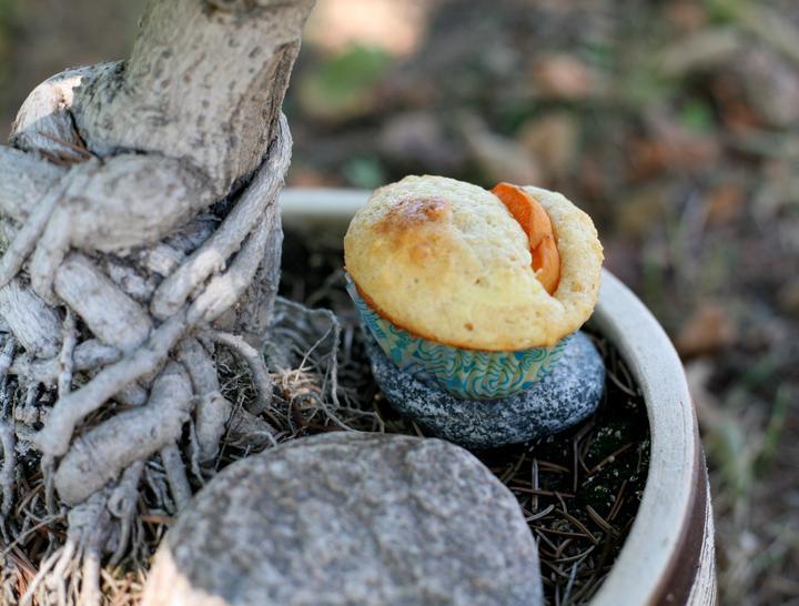 tvarohovy-muffiny