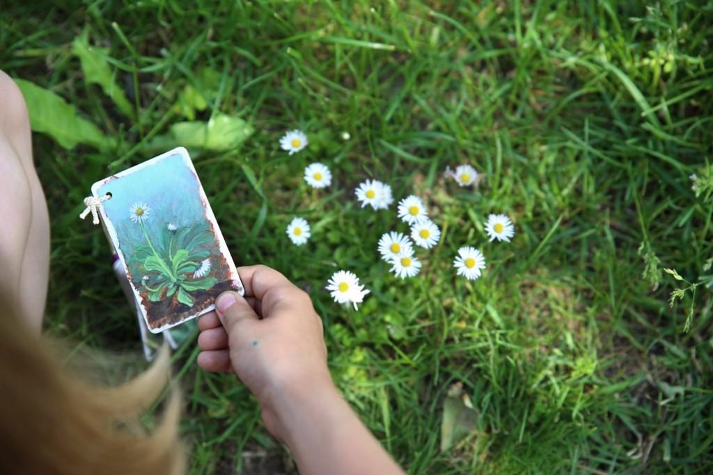 bylinky-karty