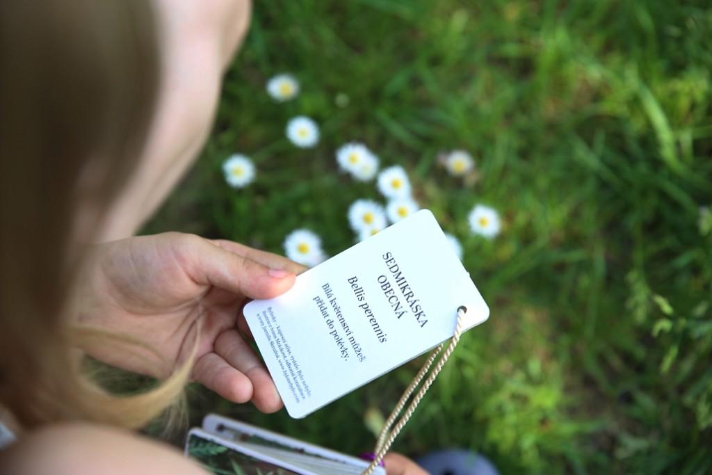 bylinky-vzdelavaci-karty
